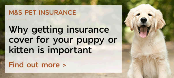 Why getting insurance cover for your puppy or kitten is important. Find out more.